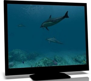 Dolphins 3D Screensaver 1.0.0.2