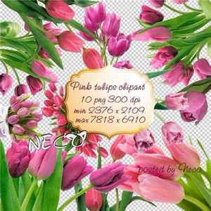 Pink Tulips clipart - Розовые тюльпаны клипарт PNG