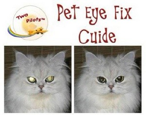 Pet Eye Fix Guide 1.2.2 RePack/Portable by Boomer