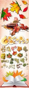 Autumn leaves PNG Files