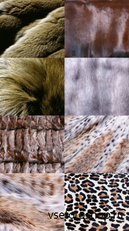 Textuers Fur and Skin