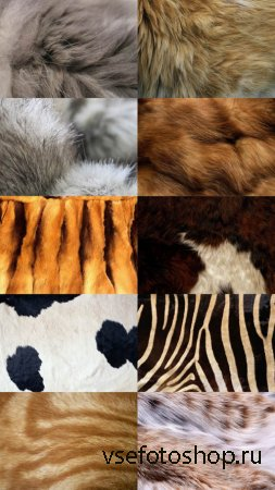 Animal Fur Textures JPG Files