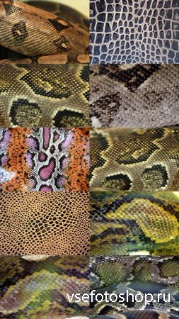 Reptile Skin Textures Set 2 JPG Files