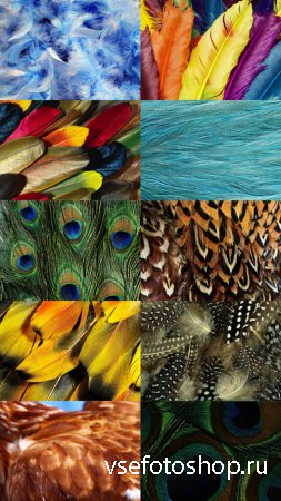 Feathers Textures JPG Files