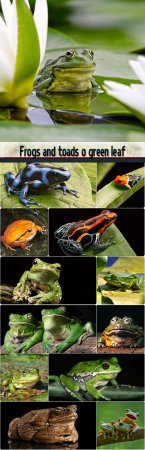 Frogs and toads o green leaf
